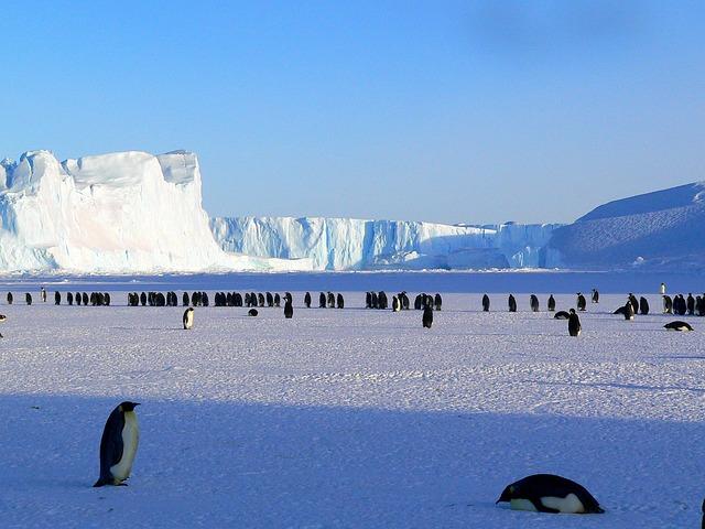 cold, penguins, cold emails