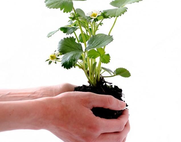 lead nurturing, human hands nurturing a plant